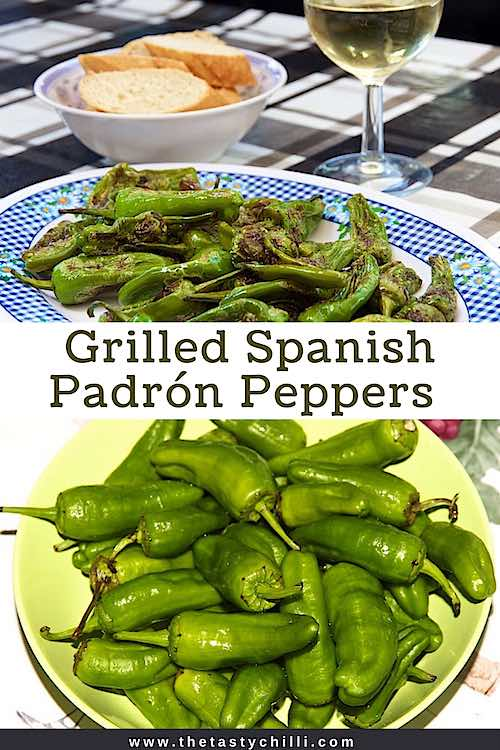 Grilled Spanish padron peppers or pimientos de padron