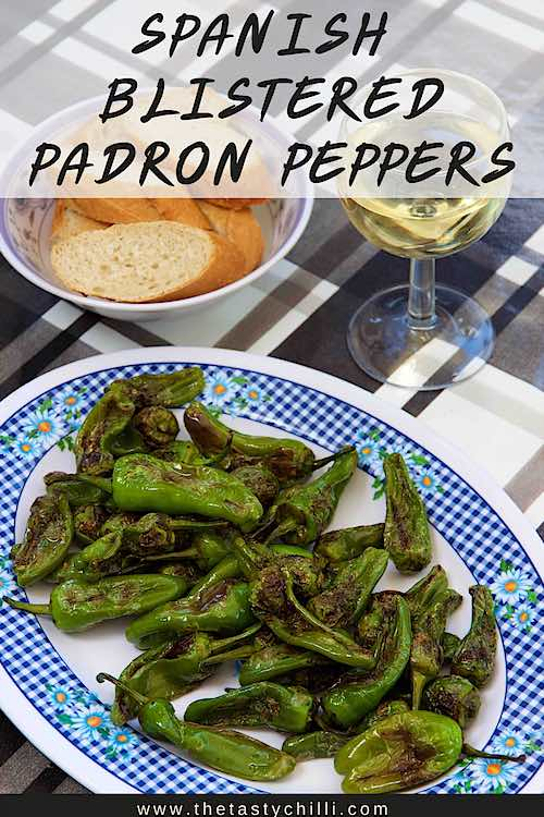 Spaanse gegrilde pepers of Spaanse padron pepers of pimientos de padron