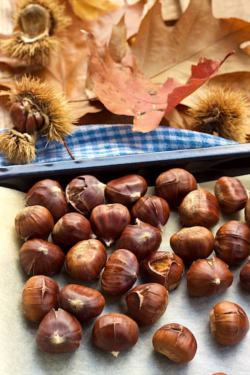 How to roast chestnuts in the oven with autumn leaves and chestnut husks